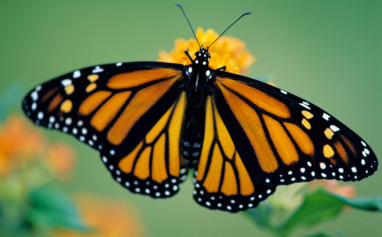 2 Monarch Butterflies Escape Hurricane Sandy Thanks to Thoughtful Family