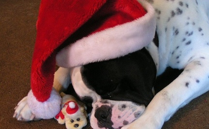 12 Dogs With Holiday Spirit