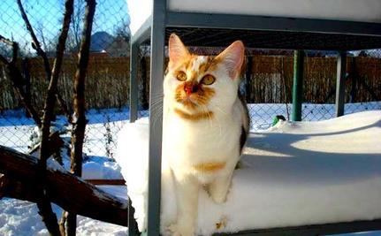 Snow Storm Blasts Cat Sanctuary