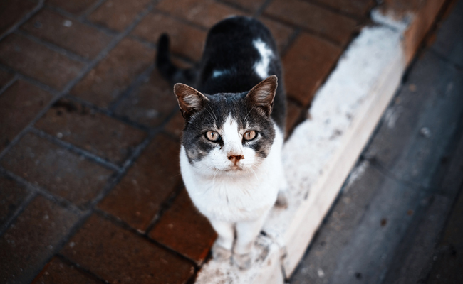 How to Keep Your Local Feral Cats Safe This Winter