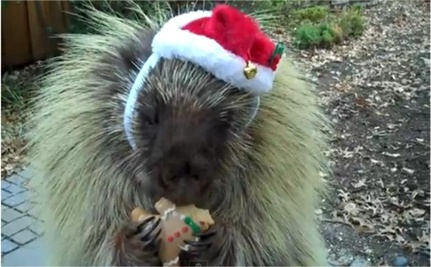 11 Unusual Animals Dressed as Santa
