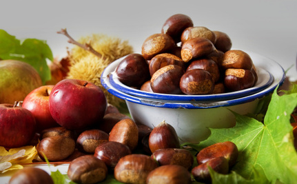 Where Are the Chestnuts for Christmas?