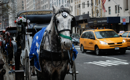 'Twas the Night Before Christmas, and Carriage Horses Were Working