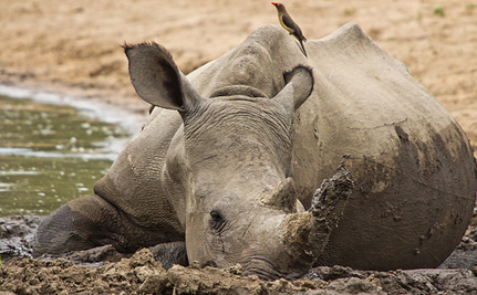 Care2 Success! S. Africa, Vietnam Unite to Fight Rhino Poaching