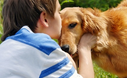 Comfort Dogs Provide Support to Newtown Massacre Survivors