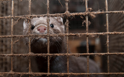 Victory! Fur Farming Banned in the Netherlands