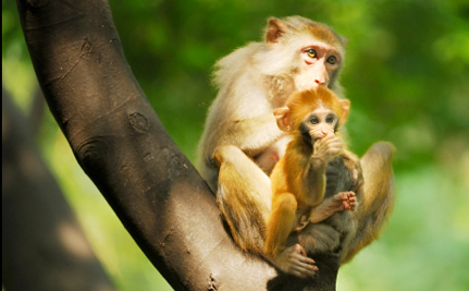 Shipping Primates for Research Slowly Becoming Taboo