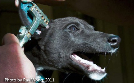 Time to Make Real Changes for Greyhounds