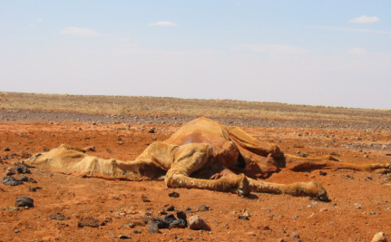 Australia Has Largest Camel Population – And is Set on Killing Them