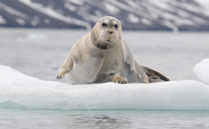 Imperiled Arctic Seals Get Endangered Species Protection