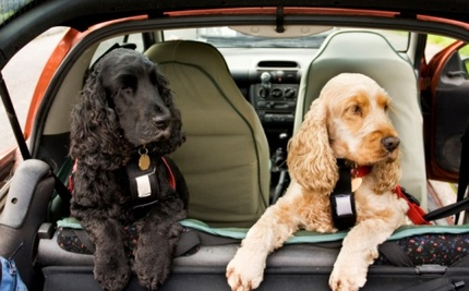 Are Doggy Seat Belts Really Safe for Your Pet?