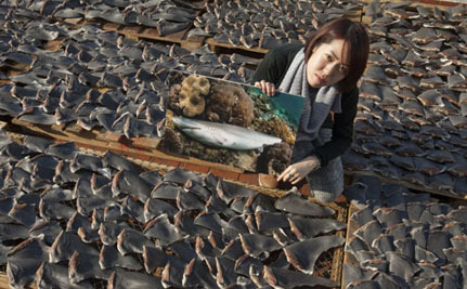 Grotesque Images Illustrate the Need to End the Shark Fin Trade