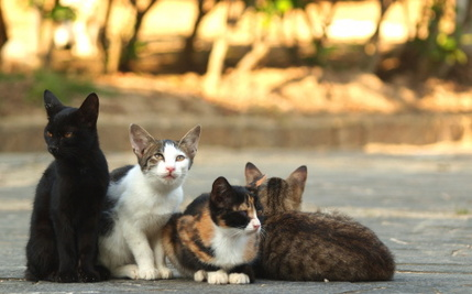 The Government Decides How Many Cats You Can Have
