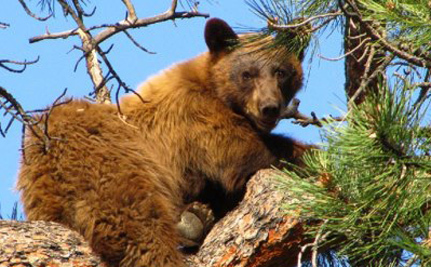 Can Bears And Humans Co-Exist?