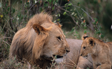 Two More Countries Ban Hunting of Africa's Endangered Species