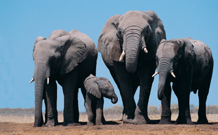 Entire Elephant Family Killed for Their Ivory
