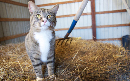 Big Barn Rescue Brings Village of Cat Lovers Together