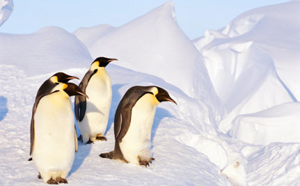 Penguin Poop Leads To The Discovery Of 9000 Penguins