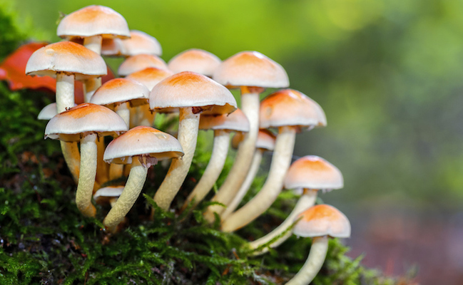 7 Reasons Mushrooms Could Save the World
