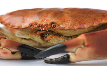 Crabs Likely Do Feel Pain: Now What Are We Going to Do About It?