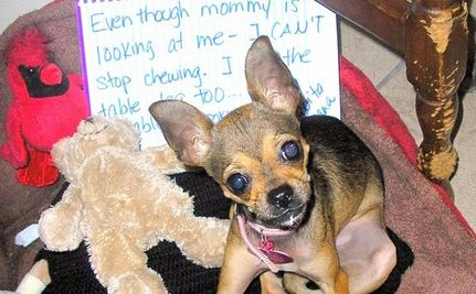 Family Fleeing Drug Warzone Saves Chihuahua With Boundless Love