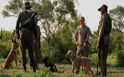 K9 Units, Drones Deployed to Fight Rampant Rhino Poaching