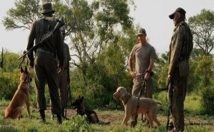 K9 Units, Drones Deployed to Fight Rampant Rhino Poaching
