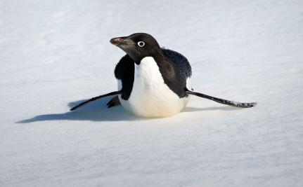 The Secret Lives of Penguins