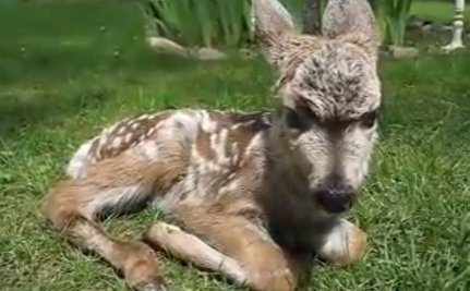 Cute Animal Video of the Day: How to Care for a Newborn Orphaned Deer