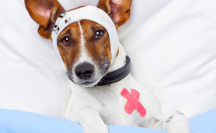 10 Signs Your Pet Needs the Vet