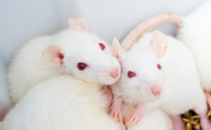 Government Fails to Fulfill Pledge to End Animal Testing for Household Products