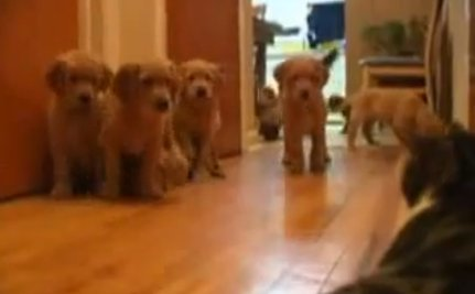 Cute Animal Video of the Day: Puppies Meet Foreign Object