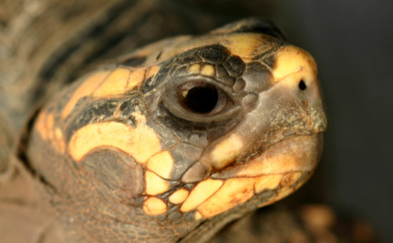 Pet Tortoise Found Alive and Well After 30 Years in Storeroom