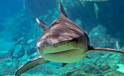 "Why Saying Shark ""Attacks"" Is Just Plain Wrong"