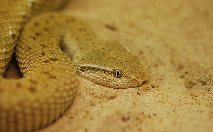 Tiny Island Home to Thousands of Deadly Snakes