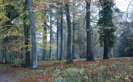 England Decides Not to Sell Off Public Forests