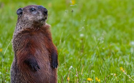 The Shady Truth Behind Groundhog Day