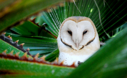 What A Hoot! Secrets of Owl Neck Rotation Revealed