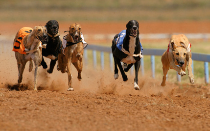 Bizarre Law Forces Greyhounds to Race, Despite Race Tracks Losing Money