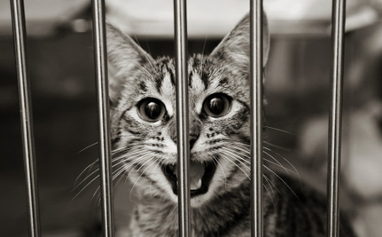 How Important is the Cat vs. Bird Debate When Millions of Cats Are Dying in Shelters?