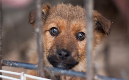 Puppies Triumph Over Angry Breeders In Texas Court | Care2 Causes