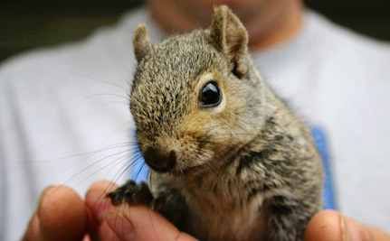 Stop Barbaric Squirrel-Killing Contest in New York