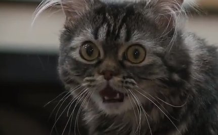 Cute Animal Video of the Day: Disabled Kitty Saved from Euthanasia, Thanks to Robotics Class