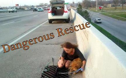 Using a Net, Women Save Limping Dog Trapped on Highway