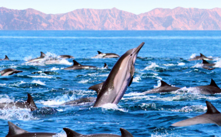 Is It Ethical to Kidnap One Dolphin to Save a Whole Pod of 150?