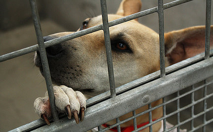 New Hampshire is a Zero Kill State. Will Your State be Next?