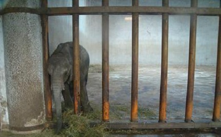 Young Elephants Stolen from Families Sold into Chinese Cages