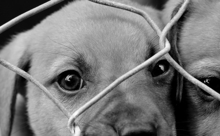 Too Hard to Regulate Dog Breeders? Just Forget It, Then!