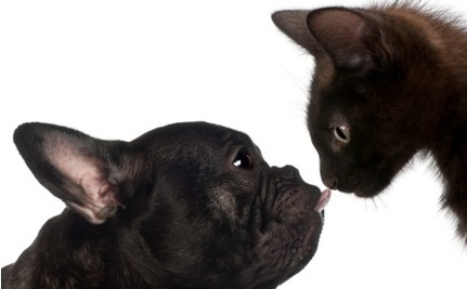 Cats versus Dogs: Science Declares a Winner?