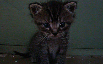 Kittens' Eyes Sewn Shut to Research Treatment for Humans
